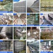 鸡笼兔笼鸽笼 网格布护栏网隔离网