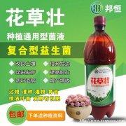 冬季大棚种植草莓抗病害增产量专用花草壮益生菌液