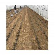 菏泽温室大棚滴水灌溉设备便宜厂家