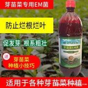 花生芽苗菜栽培防腐防霉技术