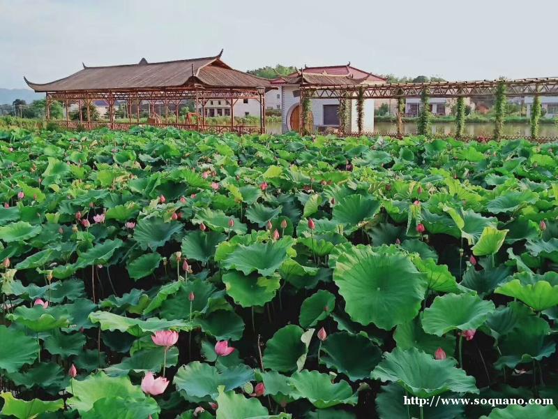 长沙原生态农家乐 长沙纯天然农家乐 最美胖仔有机生态园